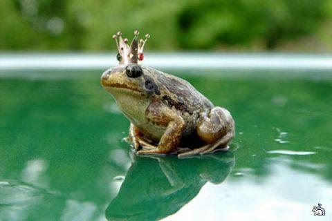 Готовится к показу спектакль на английском языке «Царевна-лягушка»
