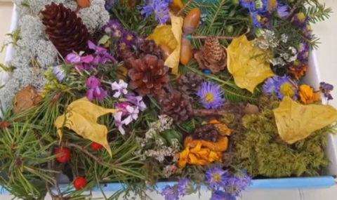 Конкурс творческих работ из природного материала «Мир в капле осени»